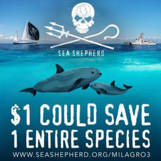 Click to visit and follow Sea Shepherd on Twitter!