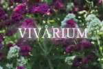 Vivarium: A Film For Today, A Message For Tomorrow!