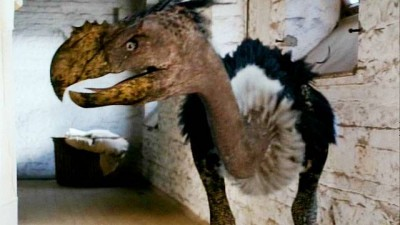 Primeval Terror Bird - Click to learn more at BBC America!