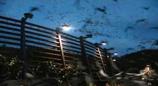 "Terra Nova: ""Instinct"" Pays Homage to Alfred Hitchcock's ""The Birds""!"