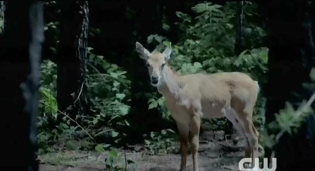 The Vampire Diaries S4 x 2 Deer Elena was hunting