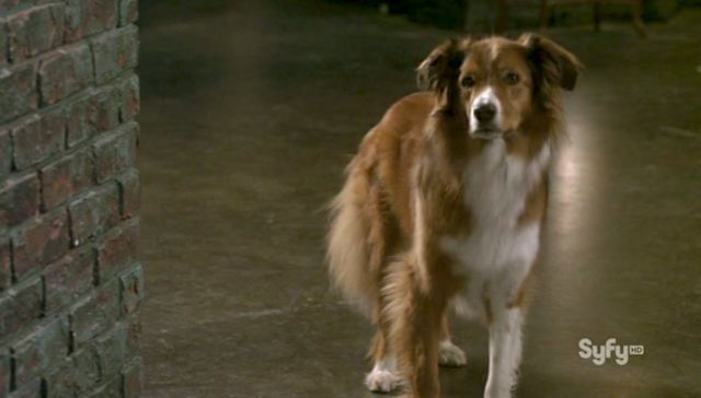 Warehouse 13 S3x10 - Trailer the Dog