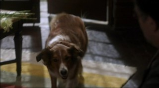 Warehouse 13 S4x01 - Trailer the Dog makes a guest appearance